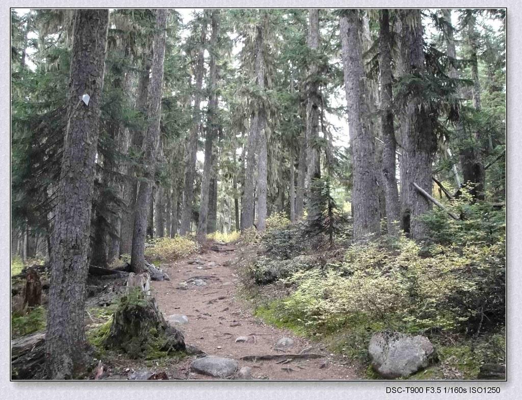 前6公里Trail