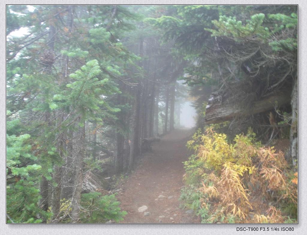 trail in fog.jpg