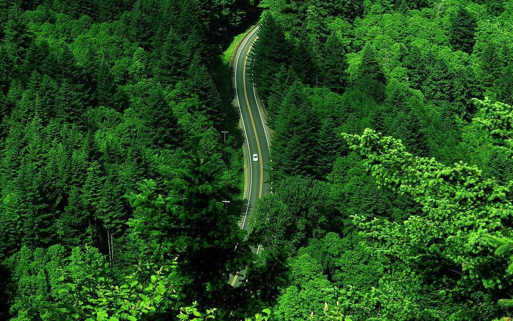 green_road1.JPG