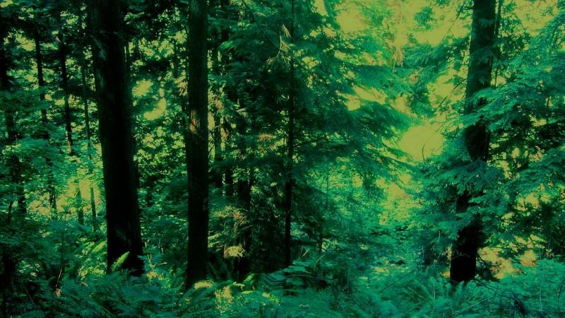 走进树林,边上是溪谷