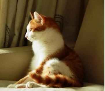 优雅猫-1.jpg