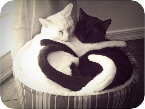 爱心猫.jpg
