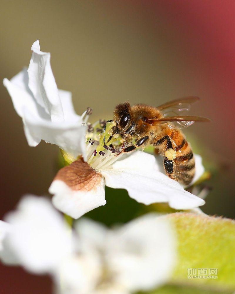 bee small-2.jpg