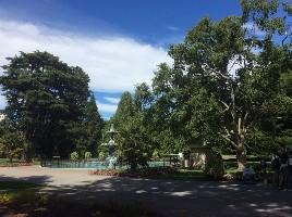 植物园门口的孔雀喷泉